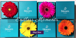 Bloom In A Box